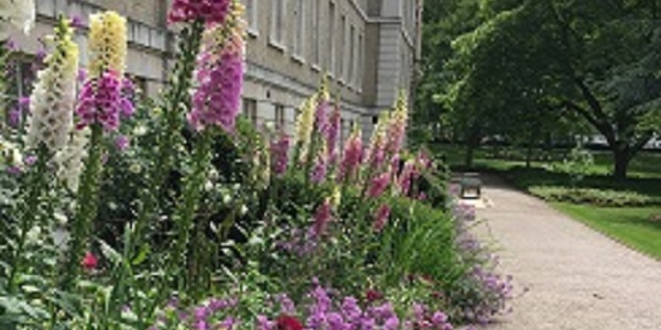 City Garden Walks